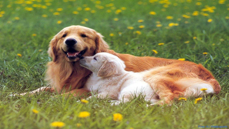 Sfondi per desktop wallpapers per pc sfondi gratis per for Foto desktop animali